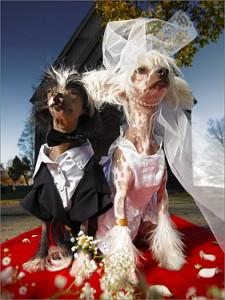 Sapnuoti vestuves